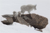 Click to see What's New : Mt. Evans